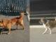 Câini lăsați liberi pe Aleea Eliberării. FOTO E. U.